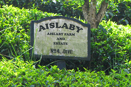 our-owned-tea-garden-aislaby